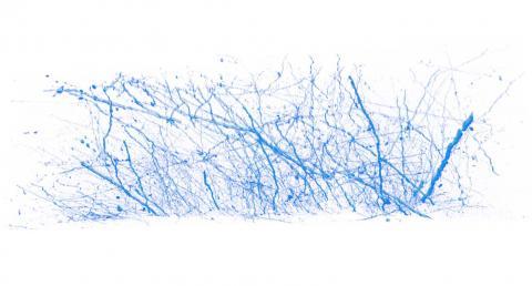 Brain analysis and visualization